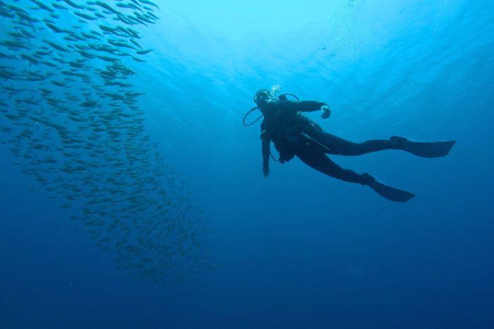 7 Mares buceador y banco de peces