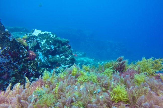 7 Mares Buceo Las Palmas