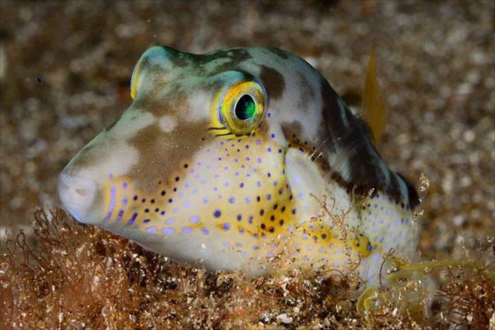 7 Mares fauna marina
