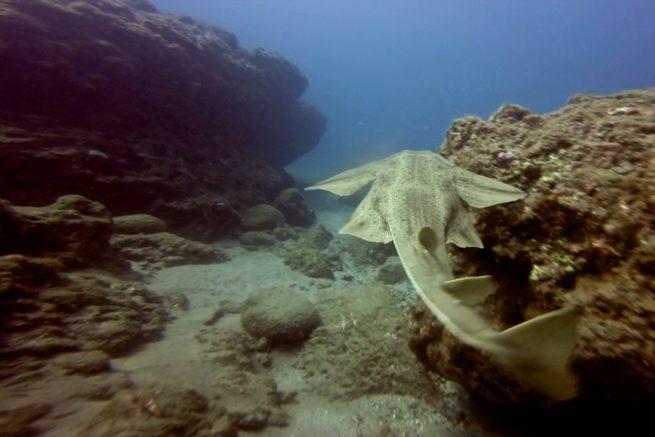 7 Mares Pequeno Tiburon