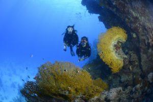 Atlantis Diving Lanzarote inmersion de buceo