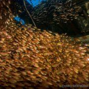 Banco de peces Urghada Mar Rojo - Ultima frontera