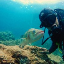 Be Water Buceo PADI Open Water