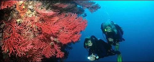 Buceadores durante inmersión de buceo en Roses