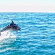 Buceo Altea Celacanto Delfines en Altea