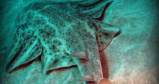 Buceo Sur Requin