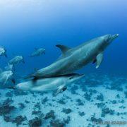 Buceo con delfines en el Mar Rojo - Ultima frontera