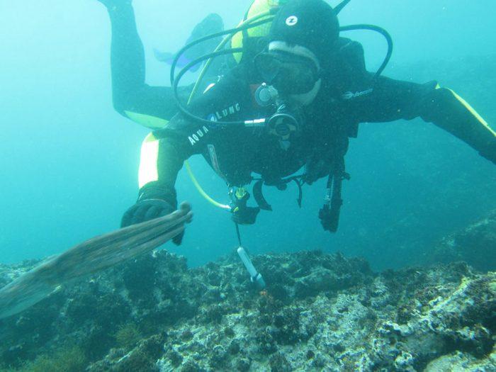 Buceo con pulpos en Galicia Mergullo Viveiro