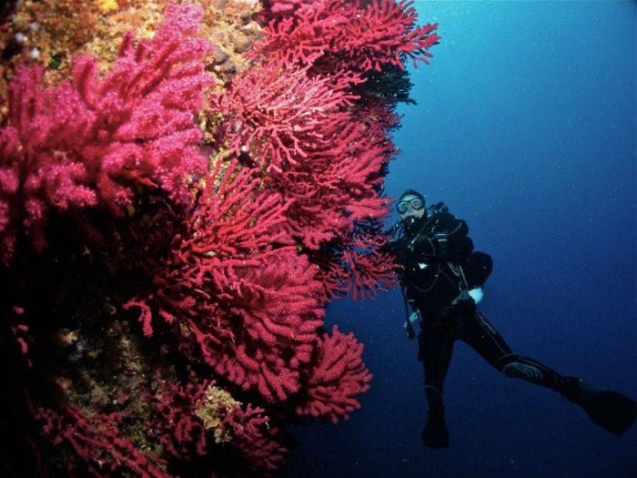 Buceo en Cap Norfeu Dive Paradis