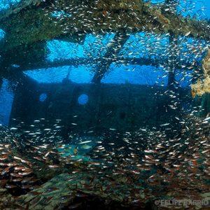 Buceo pecio Mar Rojo 3 - Ultima frontera