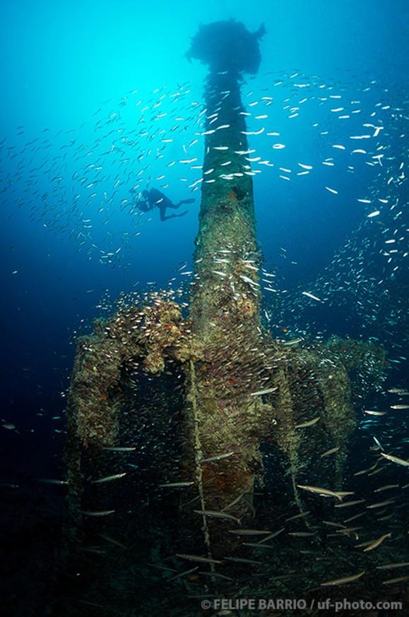 Buceo vida a bordo Mar Rojo - Ultima frontera