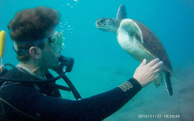 Bautismo de buceo con tortugas en Tenerife Ocean Dreams