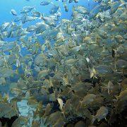 Caja Playa Blanca Atlantis Diving Lanzarote