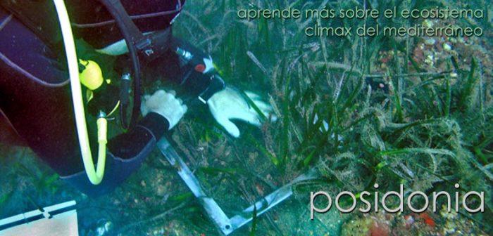 Especialidad Posidonia Isub San Jose