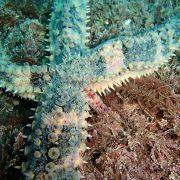 Estrella de Mar Dive Center Barbate