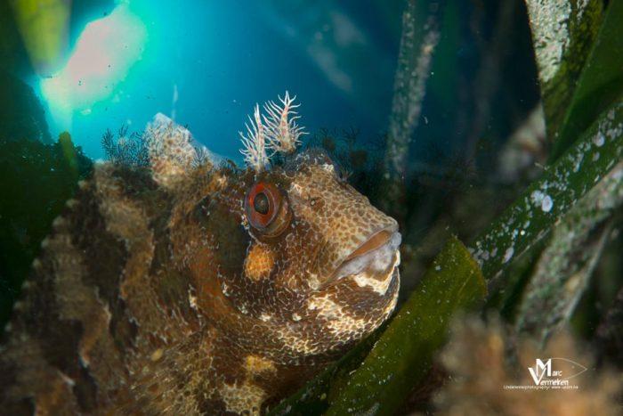 Fauna bajo el mar en Xaloc Costa Brava