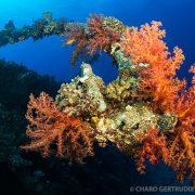 Fondo marino Mar Rojo 2 - Ultima frontera