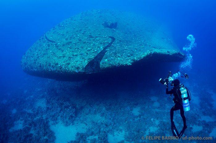 Fondo marino Mar Rojo 3 - Ultima frontera