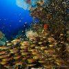 Fondo marino Mar Rojo 4 - Ultima frontera
