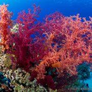 Fondo marino Mar Rojo 5 - Ultima frontera
