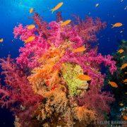 Fondo marino Mar Rojo - Ultima frontera