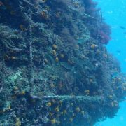 Fondo marino buceo Dive Center Barbate