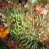 Fondo marino buceo Dive Center Barbate 3