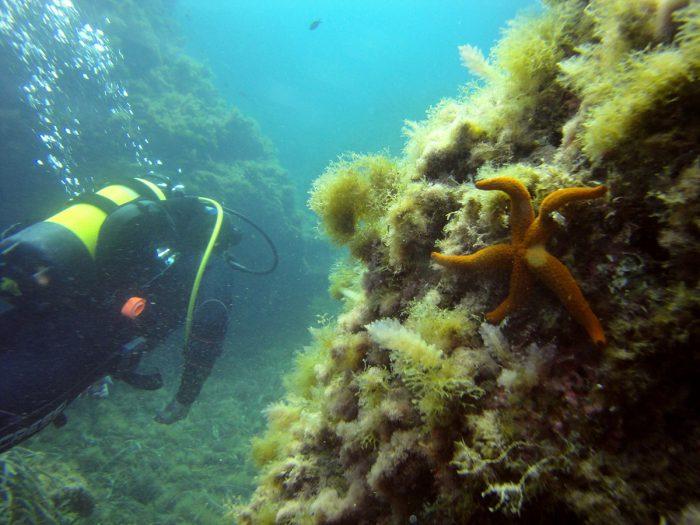 Inmersión-Buceo-Aguadulce