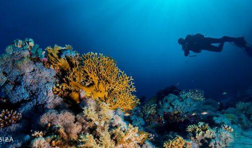 Mar Rojo Scuba Ibiza