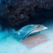 Raya Atlantis Diving Lanzarote Inmersión en Mala