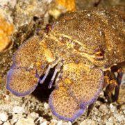 Salgar Menorca Slipper inmersiones de buceo