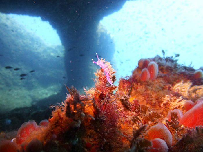 Salgar Menorca galerias de coral buceo