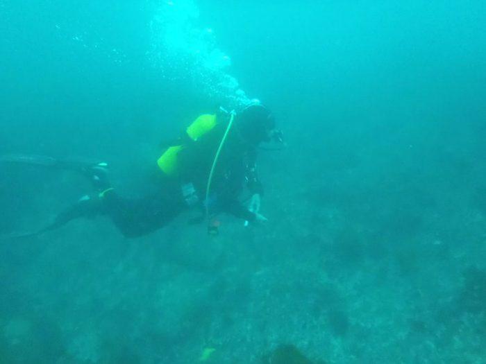 Salidas de bueo Mergullo Viveiro Galicia