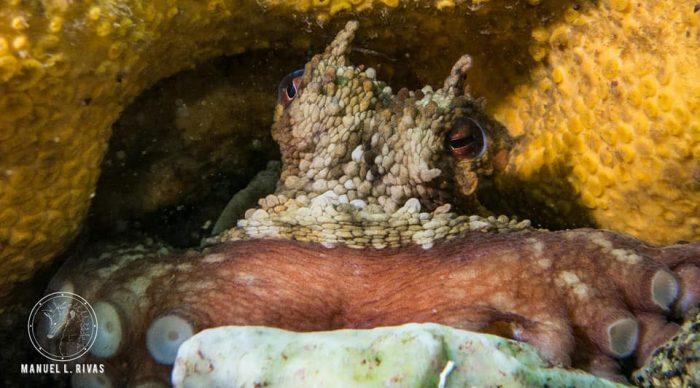 Vida marina Sanxenxo Wayuu