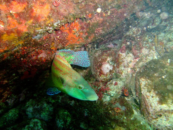 Vida-marina-en-Aguadulce