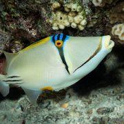 Vida marina en el Mar Rojo 2 - Ultima Frontera