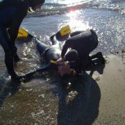ZOEA-PADI-Rescue-Diver